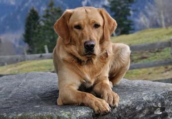Hundefriseur und Hundesalon in Neunkirchen